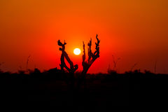 Colorful sunset in the african bush. Stock Photography