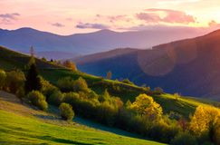 Colorful sunset in Carpathian countryside. Grassy hillsides with some trees in evening light. sky and fluffy clouds in pink light Royalty Free Stock Images