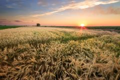 Colorful sunset fields Ukraine Royalty Free Stock Photography