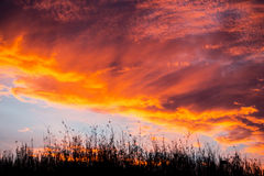 Colorful sunset over field grasses. Royalty Free Stock Image