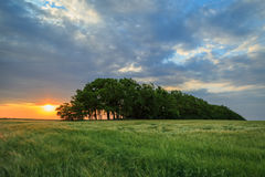 Colorful sunset over a green field of wheat Stock Images