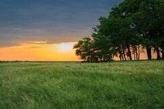 Colorful sunset over a green field of wheat Stock Photography