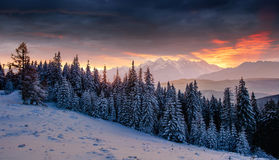 Colorful sunset over the mountain ranges in the national park. Carpathians. Fantastically illuminated winter mountains. Ukraine, Europe Royalty Free Stock Photography