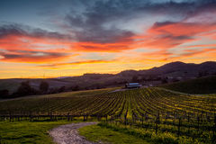 Colorful sunset over a Napa California vineyard Stock Images
