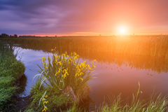 Colorful sunset over the small river. Beautiful flowers by the r Stock Image