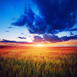 Colorful sunset over wheat field. Beauty world. Europe Stock Images