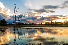 Colorful sunset in Pantanal, Brazil Stock Photography