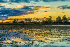 Colorful sunset in Pantanal, Brazil.  Royalty Free Stock Images