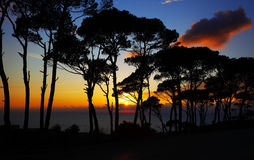 Colorful sunset in the pine forest Stock Image