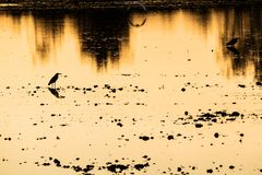 Colorful sunset at the river bank lake with bird silhouettes beautiful reflection nature background stock image