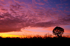 Colorful sunset with silhouette of tree. Colorful sunset with silhouette tree royalty free stock photography