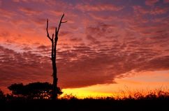 Colorful sunset with silhouette of tree. Colorful sunset with silhouette tree Stock Photography