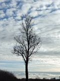 Tree and colorful sunset sky, Lithuania Royalty Free Stock Image