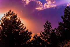 Colorful sunset sky and clouds with silhouette of pine trees. Orange and purple color sky. Sun behind the tree royalty free stock image
