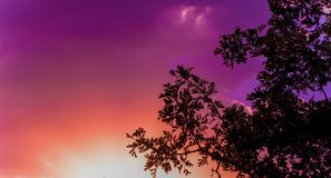 Colorful sunset sky and clouds with silhouette of a tree. Orange and purple color sky at dusk. Nice for using as wallpaper image stock images