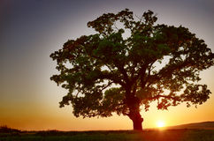 Colorful sunset with tree Royalty Free Stock Photography