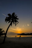 Colorful sunset on tropical beach with palm trees silhouettes Stock Photos