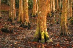 Colorful Swamp Scene at Avery Island, Lousiana stock photo