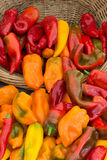 Colorful Sweet Peppers royalty free stock photos