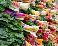 Colorful Swiss chard on display Royalty Free Stock Photo