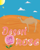 Colorful T-shirt graphic design. Typography with Desert Rose quote, sun, desert and a camel - Eps 10 vector and illustration Royalty Free Stock Photos