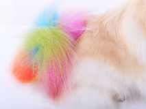 Colorful tail Stock Image
