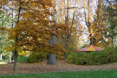 Colorful tent under autumn oak Royalty Free Stock Photo