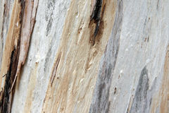 Textured Tree Trunk Bark. A closeup of a textured tree trunk with peeling bark Stock Photography