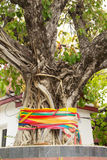 Colorful three color fabric around the old tree. people in asian Royalty Free Stock Photos