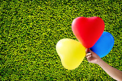 Colorful three in hand balloon on green leaves wall background Royalty Free Stock Photo