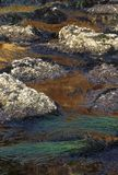 Colorful tide pools Stock Photo