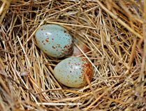 Colorful Tiny Bird Eggs Royalty Free Stock Images