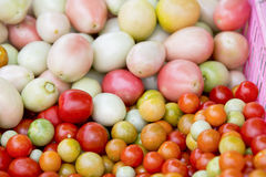Colorful tomatoes Stock Photos