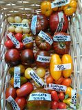 Colorful tomatoes in basket 2. Various tTomatoes in wooden basket, heirloom Royalty Free Stock Photography