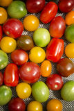 Colorful tomatoes on a plate Stock Photography