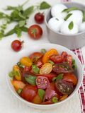 Colorful tomatoes salad. With basil and spring onion Royalty Free Stock Photos