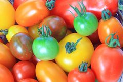 Colorful tomatoes Royalty Free Stock Image