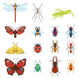 Colorful top view insects icons isolated on white wildlife wing detail summer worm and caterpillar bugs wild spider bee Stock Photos