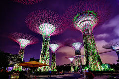 Colorful Towers of Gardens by the Bay in Singapore at Night Stock Photography