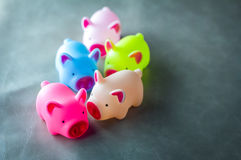 Colorful of toy pigs  with copy space Stock Photography