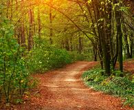 Colorful trail path in green deciduous forest in sunlight at sunset, woods landscape. Colorful trail path in a green deciduous forest in the sunlight at sunset stock image