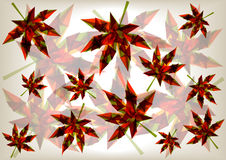 Colorful transparent leaves Royalty Free Stock Photos