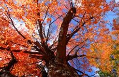 Colorful Tree Stock Photos