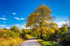 Colorful tree along a country road in rural York County, Pennsyl Stock Photography