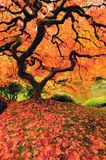 Colorful Tree in autumn Stock Photo