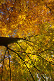 Colorful tree in autumn, Germany. Colorful tree in autumn, Karlsruhe, Germany Stock Photos