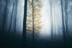 Colorful tree in spooky woods royalty free stock photography