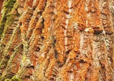 Colorful tree bark. Trunk background Stock Image