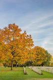 Colorful tree at the canadian war graves in Groesbeek Stock Photos