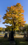Colorful tree in the cemetary. A Colorful autumn tree in a cemetary, with grave stone in the shadow of the foreground Stock Photo